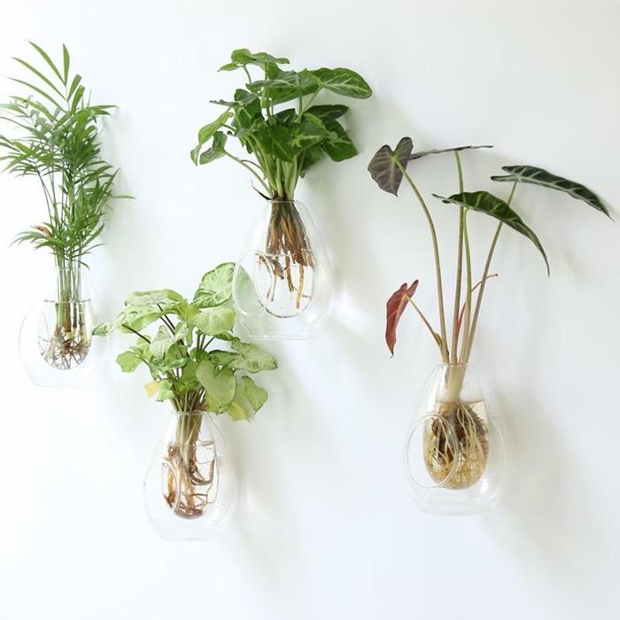 植物.jpeg