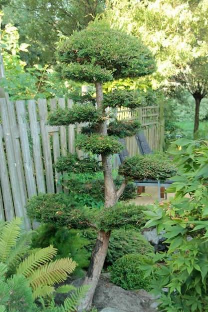 bonsai-tree-garden-design_9498.jpg